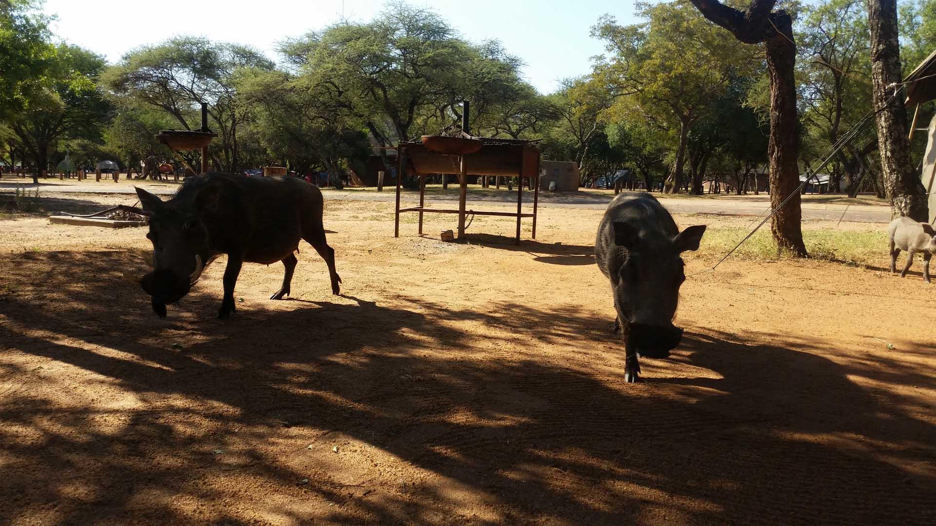 Pilanesberg Camp Site