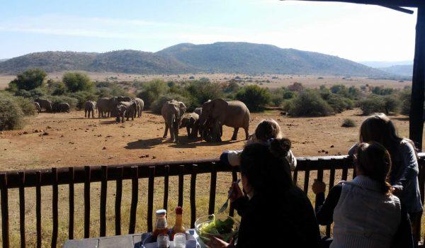 Pilanesberg Lunch Stop