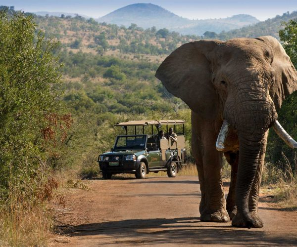 Elephant and Open Game Viewer in Pilanesberg